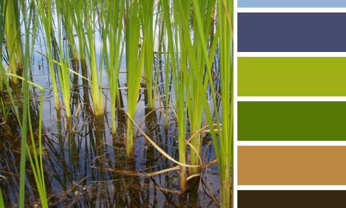 Wetlands Color Palette
